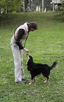 Dog training picture 1